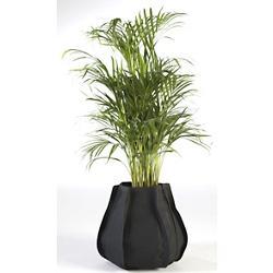Urban Garden Plant Sack