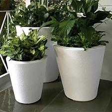 Dot Self-Watering Planter