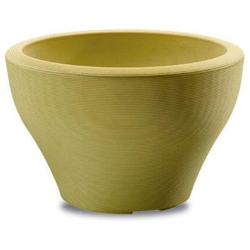Shown in Citron
