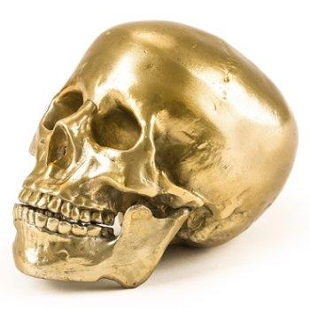 Wunderkrammer Human Skull, Left view
