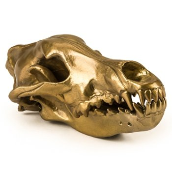 Wunderkrammer Wolf Skull, Right view
