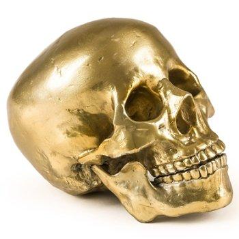 Wunderkammer Human Skull