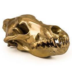 Wunderkammer Wolf Skull