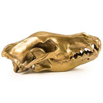 Wunderkammer Wolf Skull, Side view